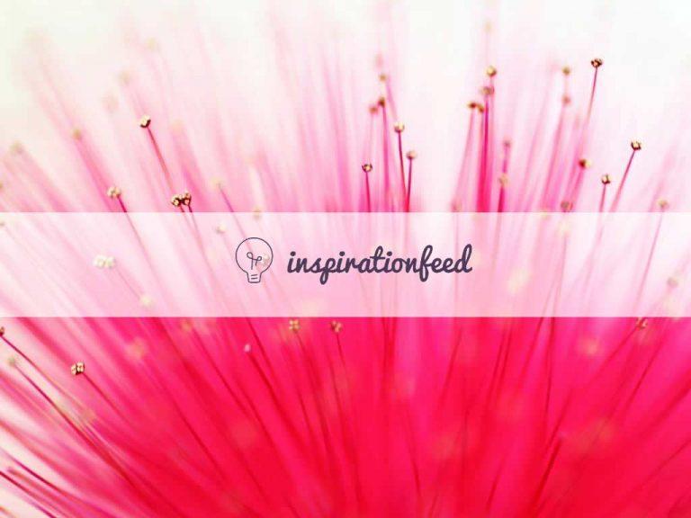 Inspiration Feed
